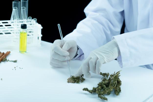 Marihuana medicinal en España