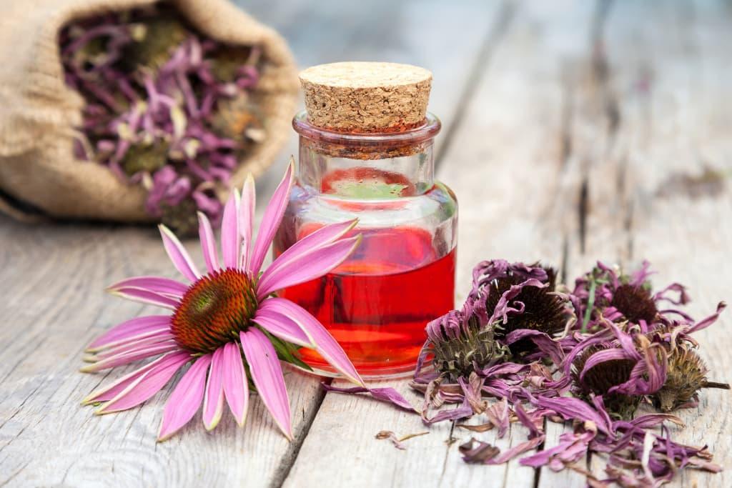 La equinácea es una driga vegetal con efectos antioxidantes.