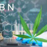¿Qué es el Sistema Endocannabinoide Humano?